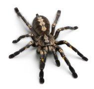 spider pest control brisbane