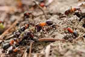 ants-pest-control-brisbane