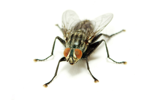 flea and fly control professionals