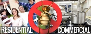 residential and commercial flea and fly control