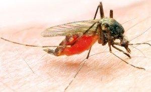 mosquito pet control brisbane