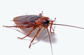 residential pest control and inspection